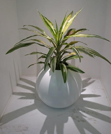 観葉植物のディスプレイ写真